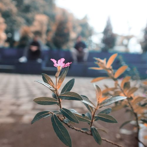 Streetphotography Flower Lightroom Edit Suburbia Fujifilm 55mm