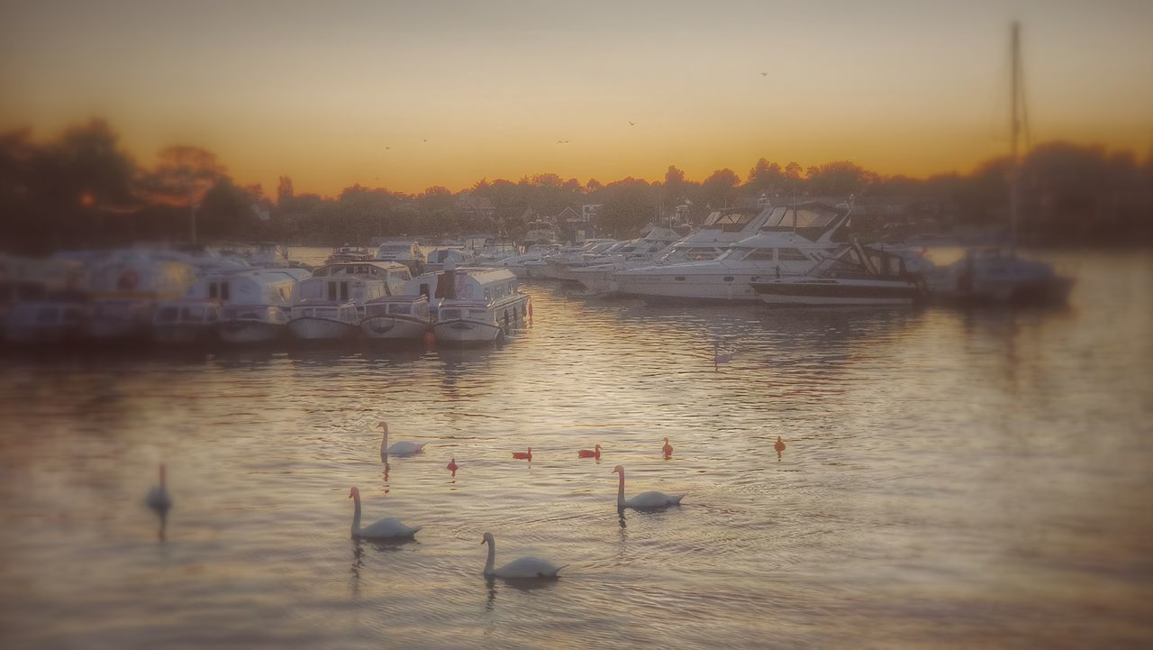 water, sunset, reflection, no people, nautical vessel, nature, mode of transport, scenics, transportation, outdoors, tranquility, harbor, lake, beauty in nature, travel destinations, built structure, bird, animals in the wild, sailboat, sky, moored, day, architecture, yacht, animal themes