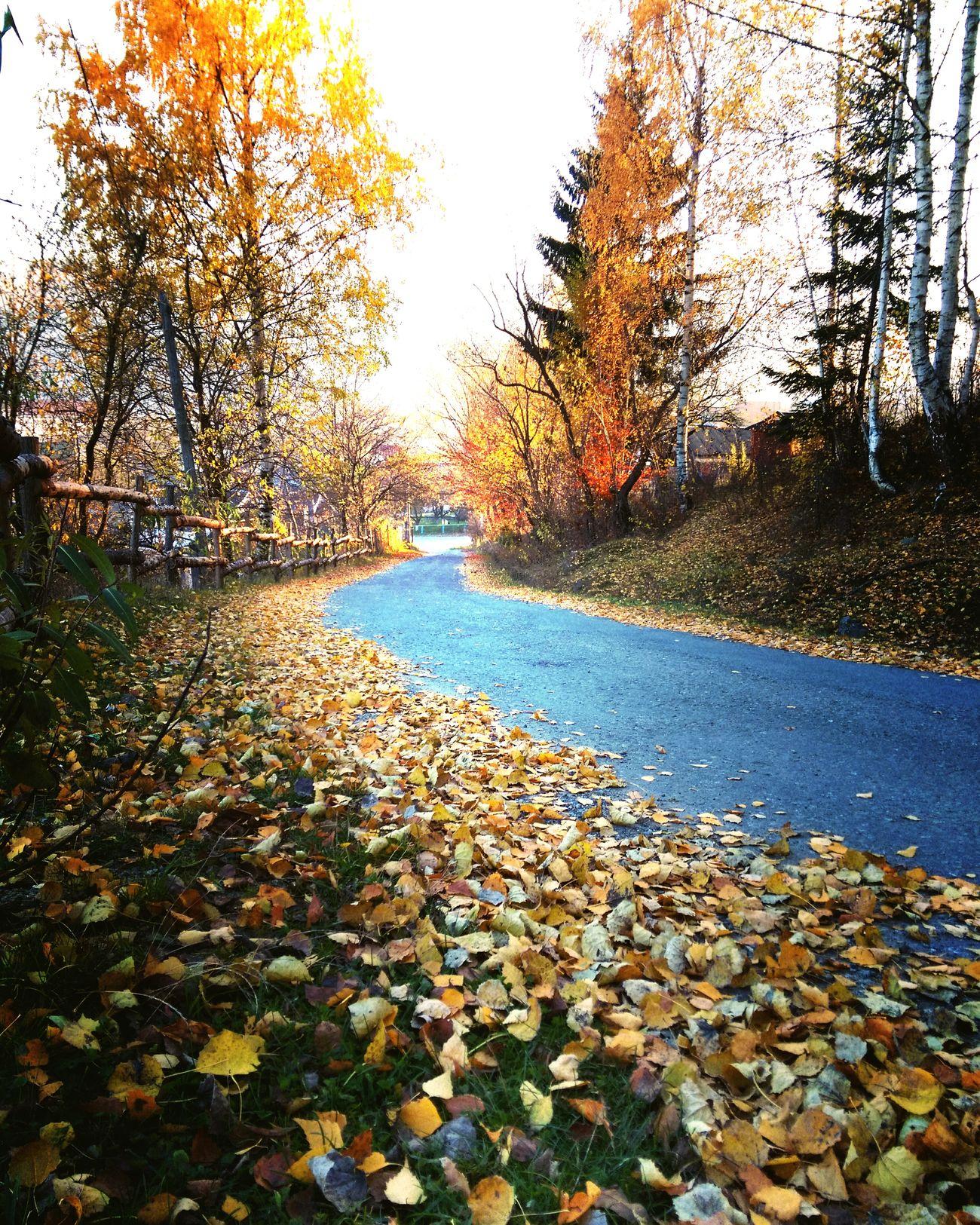 Autumn Autumn Colors Yellow Leaves Roads Yaremche Ukraine Taking Photos Hello World Enjoying Life Coolplace Karpathian Mountains