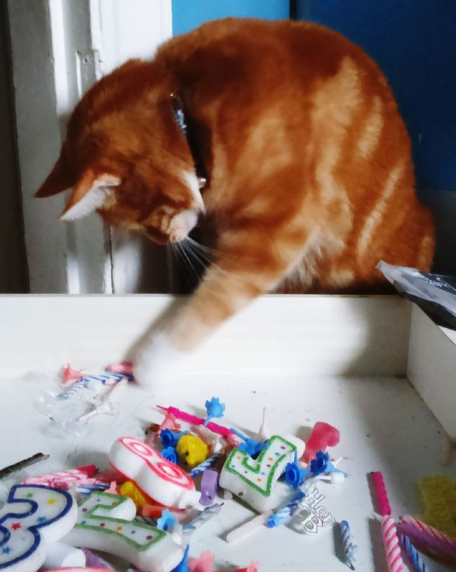 Playing Playing Cat Cat Cats Feline Ginger Cat Orange Cat Ginger And White Cat Orange And White Cat Domestic Cat Kitchen Drawers Candles Numbers