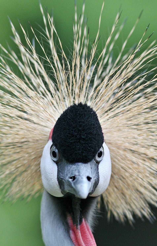 Beautiful stock photos of kunst, Animal Head, Animal Themes, Animal Wildlife, Animals In The Wild