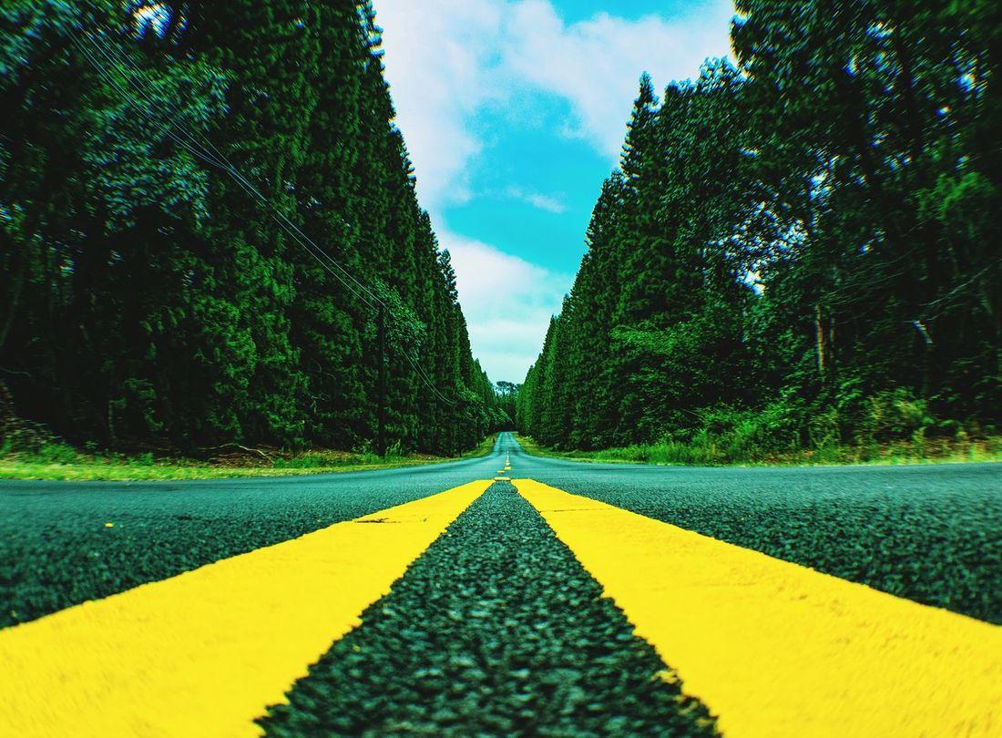 Hawaii roads From My Point Of View Roadsidephotography RoadsideView Landscape_photography Tree_collection  Trees And Sky Bigisland Hawaii Big Island Hawaii Hawaiishots Taking Photos Trees Collection
