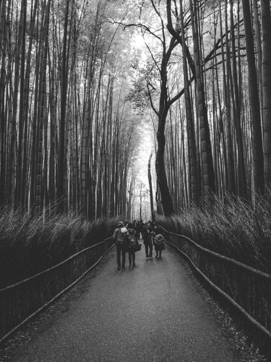 Adult Bamboo Grove Bare Tree Beauty In Nature Day Domestic Animals Full Length Leisure Activity Lifestyles Mammal Men Nature Outdoors People Real People The Way Forward Togetherness Tree Walking Women