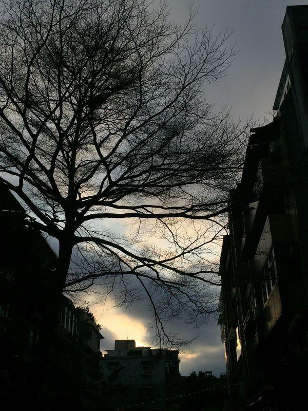 Tree Sceen Sunset First Eyeem Photo