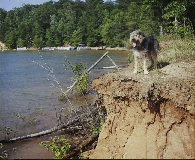 Dog Nature Summer Lake 120mm Medium Format Velvia100 Mamiya RB67 Filmisnotdead