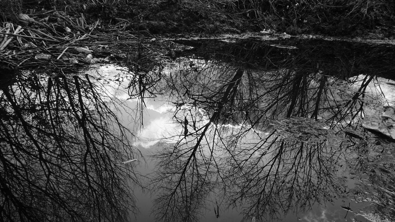 Reflection Of Bare Trees On Water