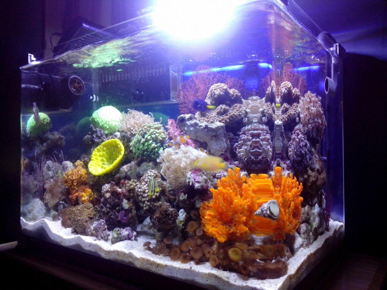 Akuarium Laut Saltwatertank Reeftank Indonesia_allshots Akuarium Aquarium Allshots All_shots Marinelife Saltwaterfish