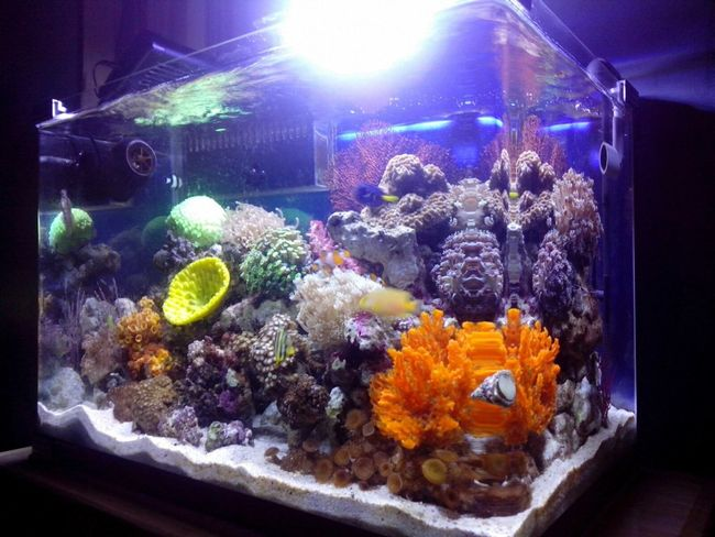 Akuarium Laut Saltwatertank Reeftank Indonesia_allshots Akuarium Aquarium Allshots All_shots Marinelife Saltwaterfish