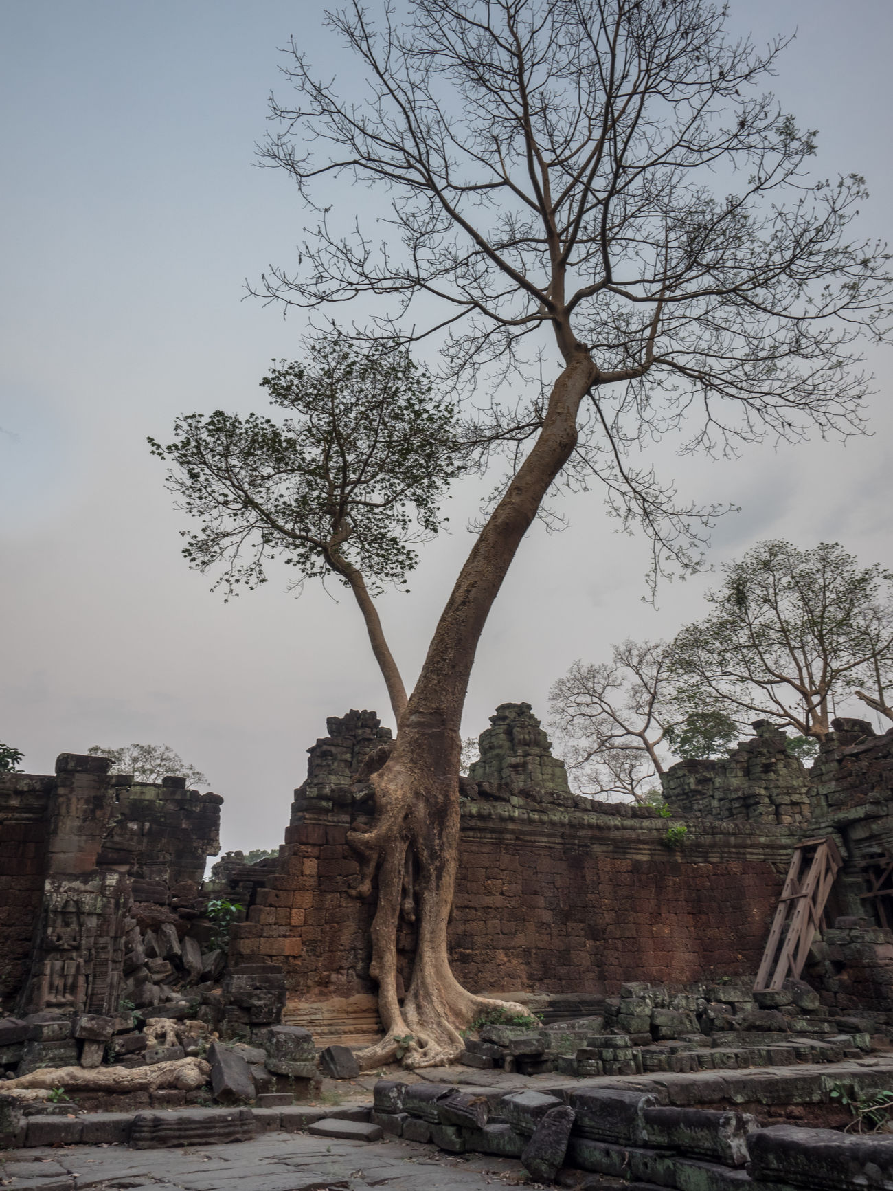 Ancient Civilization Angkor Wat BIG Cambodia Cultures Day Fig Tree Kambodscha Nature No People Outdoors Place Of Worship Roots Roots Of Tree Temple Temple - Building Travel Travel Destinations Tree Tree Wall