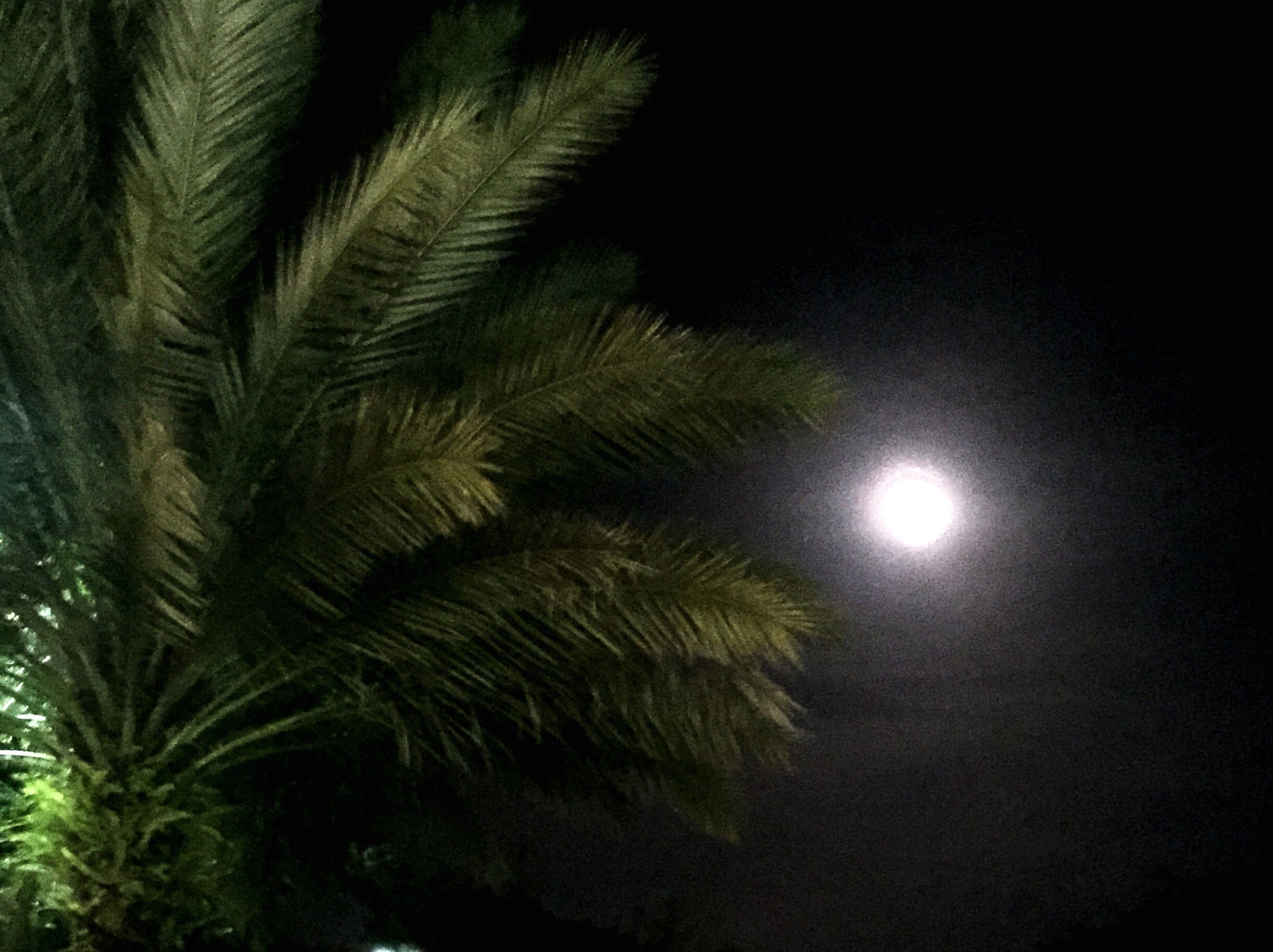 low angle view, night, sky, nature, growth, tree, beauty in nature, palm tree, tranquility, moon, sun, outdoors, illuminated, no people, glowing, silhouette, scenics, branch, full moon, tranquil scene