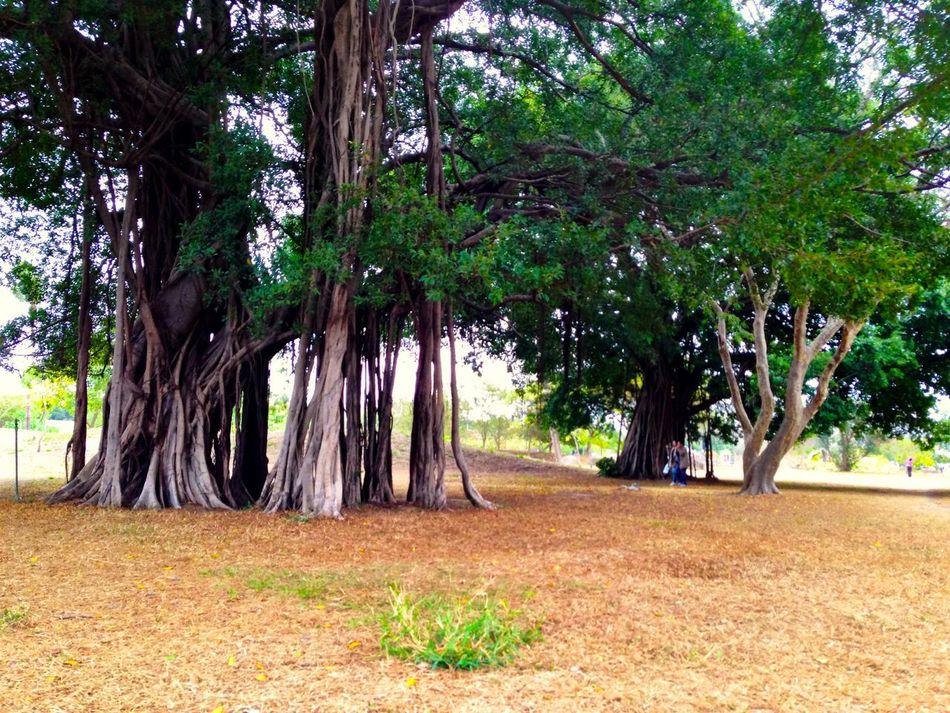 Trees Old Tree Park