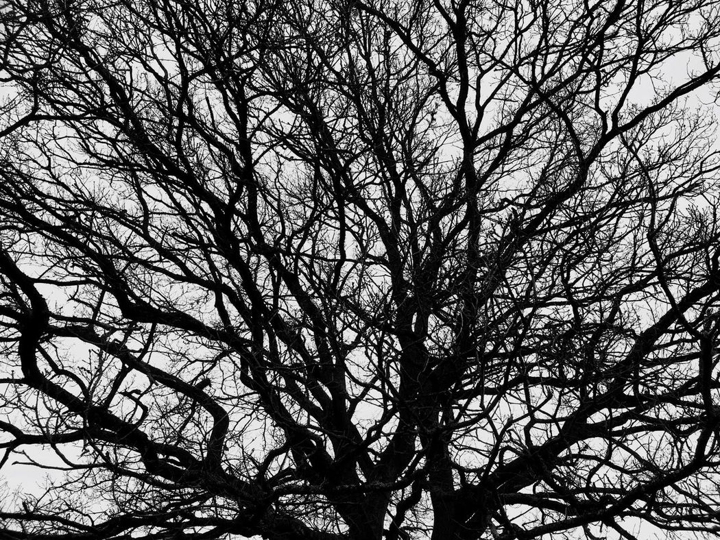 Tree Nature Low Angle View Branch Bare Tree No People Sky Beauty In Nature Backgrounds Outdoors Tranquility Day This Week On Eyeem