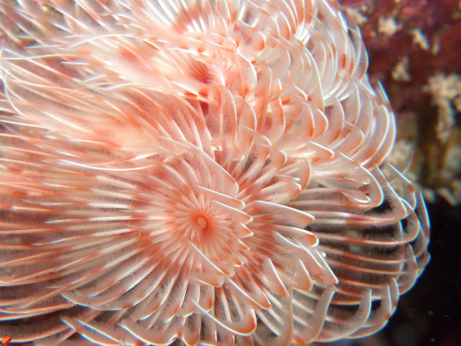 Sea Hello World Color Pictures
