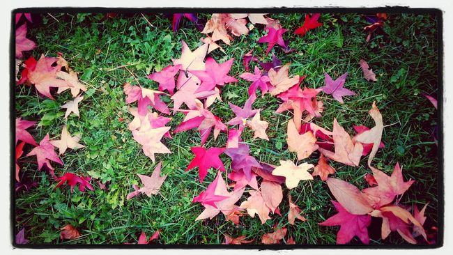 herbst tag