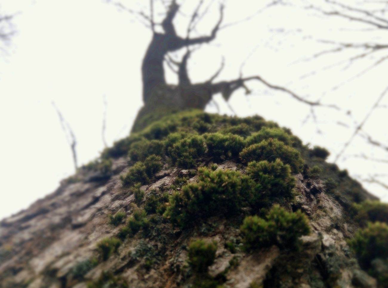 Tree Branch Tree Trunk Nature Low Angle View No People Outdoors Sky Beauty In Nature Day Close-up