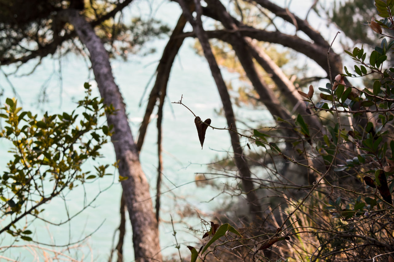 Tree Nature Branch Bird Outdoors No People Beauty In Nature Close-up Sky Perching Travel Destinations Scenics Landscape Coastline Nikon D3300 Tranquility Couple Heart Heart Shape Nature Trees Tranquil Scene Beauty In Nature Wet Tree