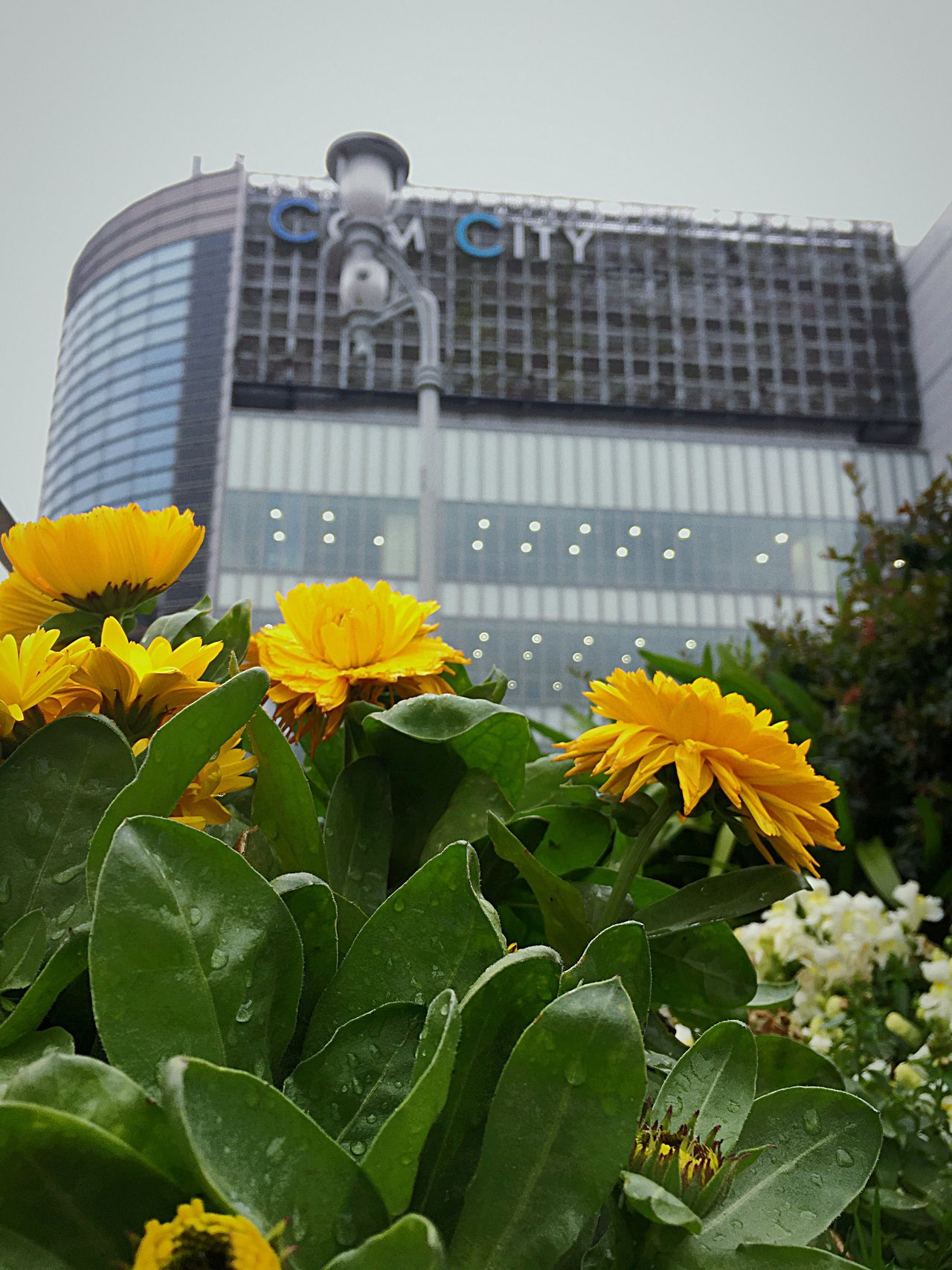 Flower Plant Fragility Growth Yellow Building Exterior Built Structure Leaf Petal Nature Architecture Blooming Beauty In Nature Freshness Flower Head Outdoors Day No People City Water
