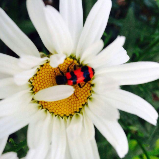 Melichettyy Turkeystagram Turkey Flower Summer ☀