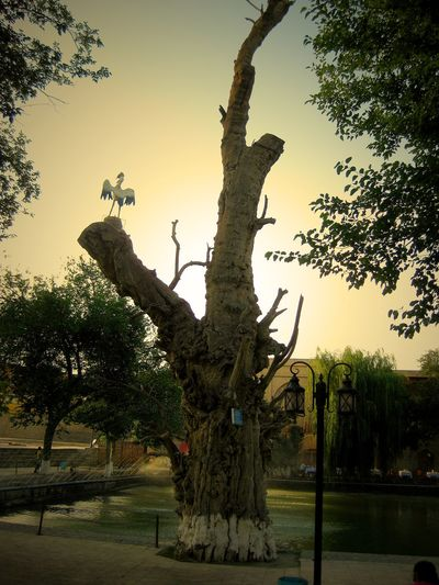 One of the central points of the city is here in the square surrounding thr hauz or the pond. Fountains Bird Sculpture Bukhara Pond Square Uzbekistan Vignette Day Dining Former Soviet Union Lyabi-hauz Outdoors Popular City Attraction Sky Travel Destinations Travel Photo Tree Tree Trunk