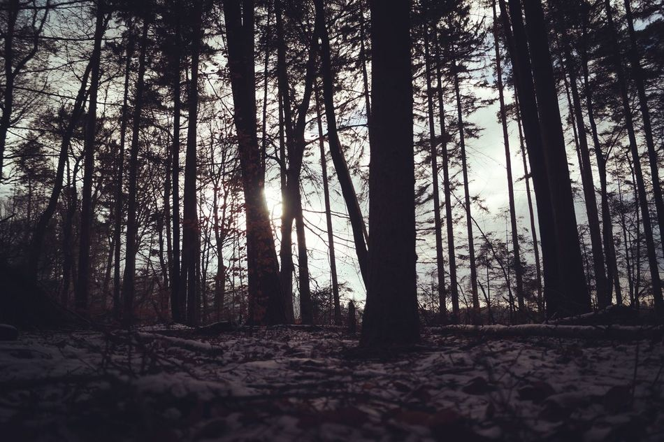 Forest Mysthical Shady Winter Snow