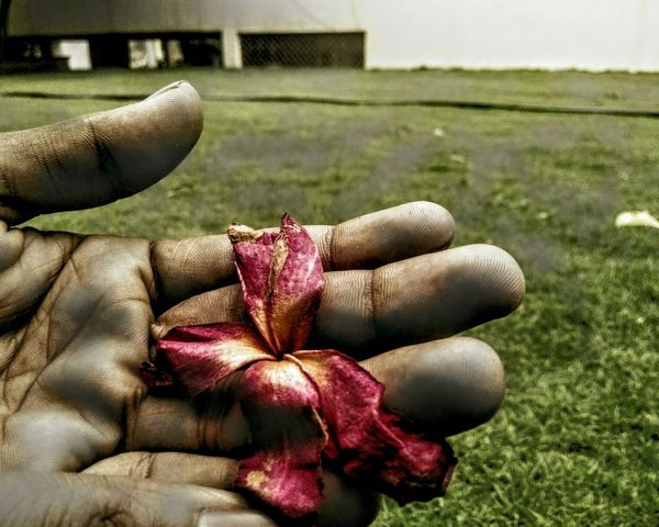 Holding Flowers :) Mobile Photography