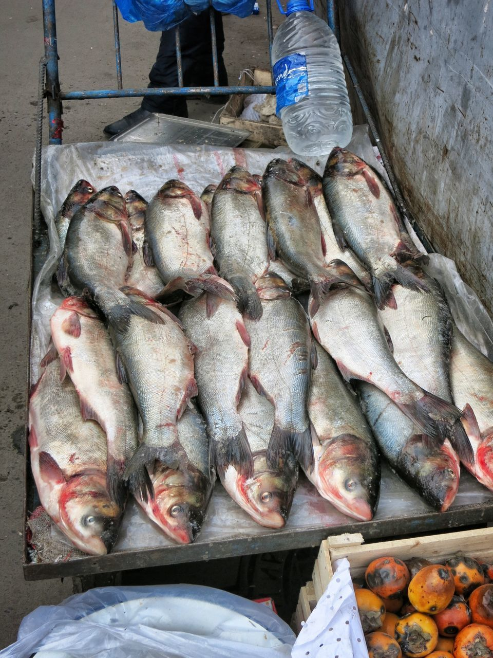 High Angle View Of Fishes For Sale
