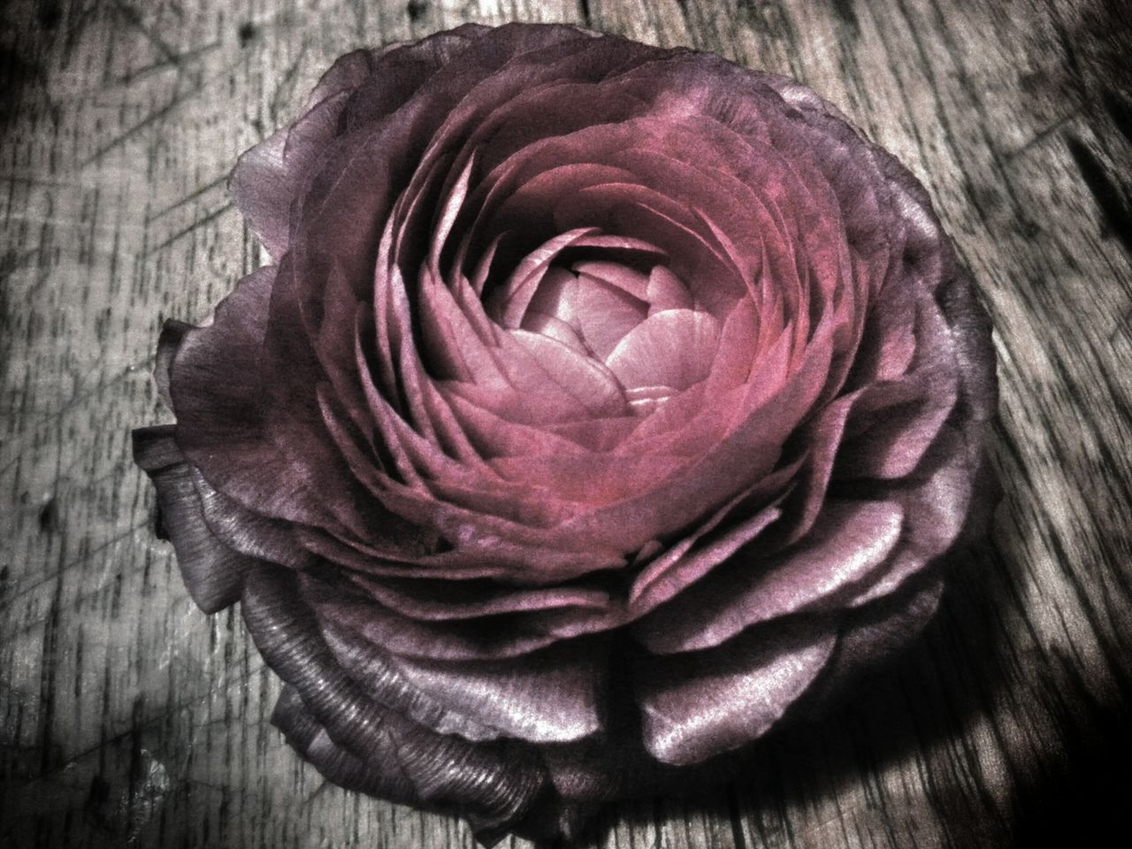 """All of the flowers. All of the flowers I gave her. She burned them. Burned them..."" (Type O Negative) Flowerporn ShowMeYourDarkSide Your Art Is Portable With Caseable Dark Visions"