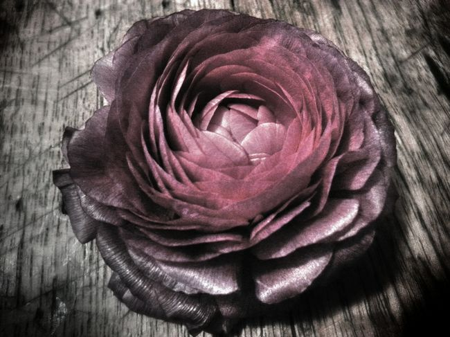"""""""All of the flowers. All of the flowers I gave her. She burned them. Burned them..."""" (Type O Negative) Flowerporn ShowMeYourDarkSide Your Art Is Portable With Caseable Dark Visions"""