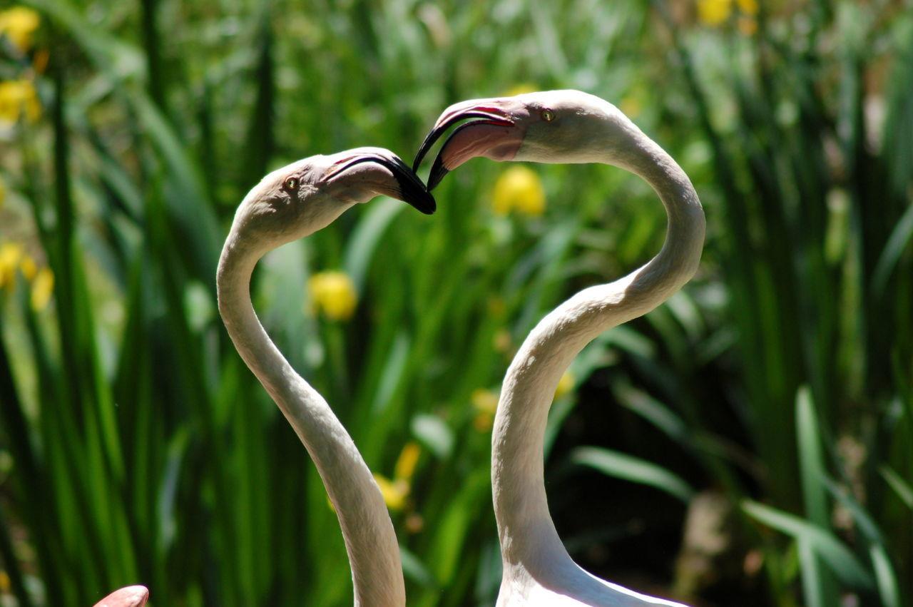 Beautiful stock photos of kuss, Animal Themes, Animal Wildlife, Animals In The Wild, Beak