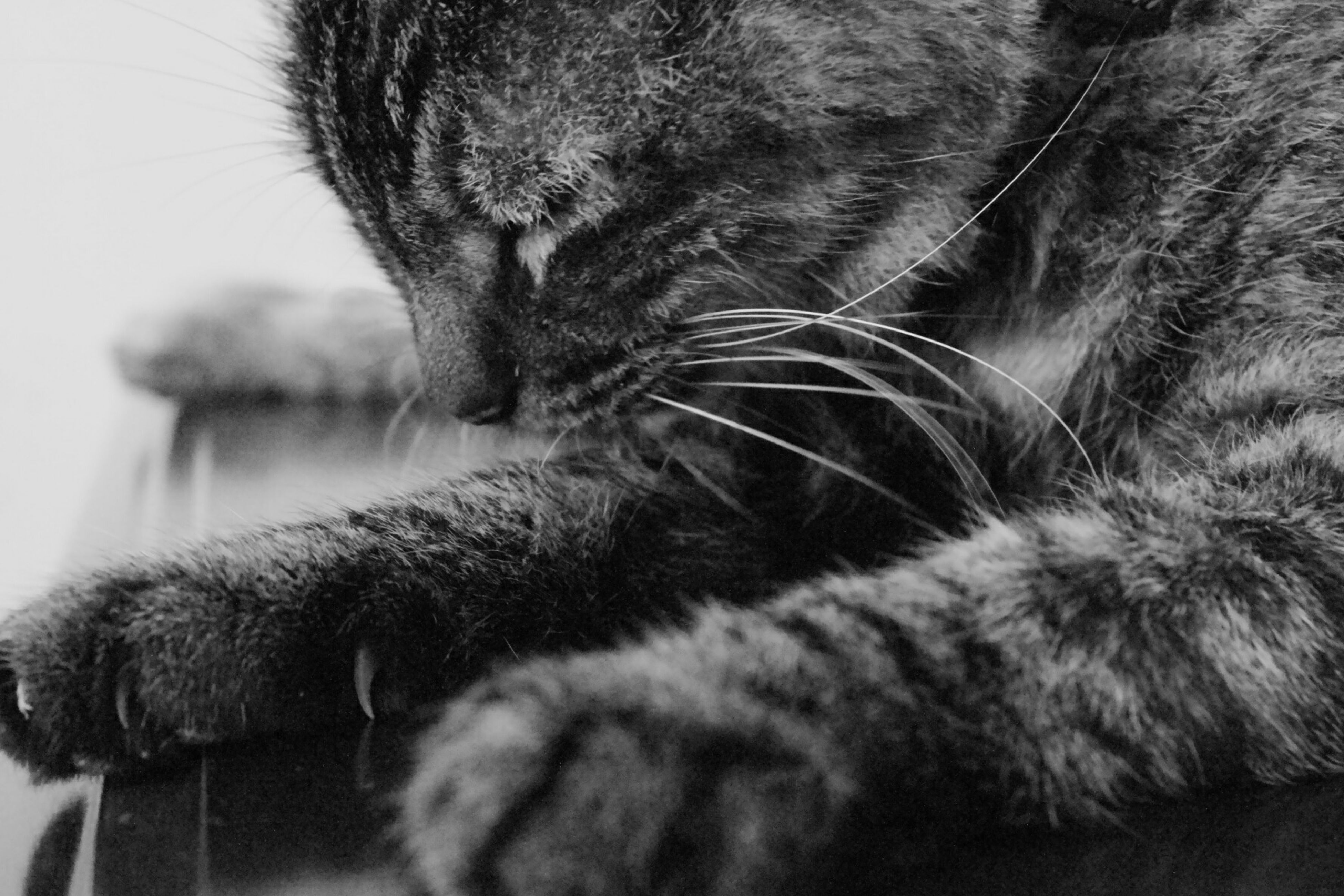 domestic cat, cat, feline, one animal, pets, domestic animals, animal themes, mammal, whisker, close-up, indoors, relaxation, animal head, animal body part, resting, whiskers, eyes closed, looking away, no people, tabby