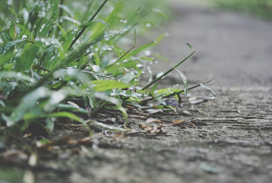 grass Photography Streetphotography Taking Photos Streetart