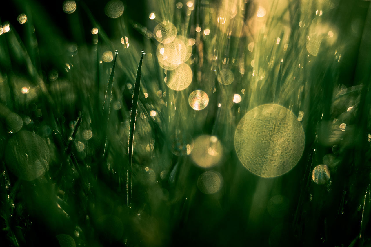 Beauty In Nature Bokeh Bokeh Bubbles Close-up Day Freshness Grass Grass Green Color Growth Meadow Nature No People Outdoors Plant