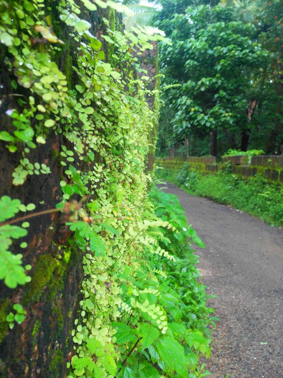 Green Walls Algaebloom Roadlesstravelled Kerala The Gods Own Country ;)