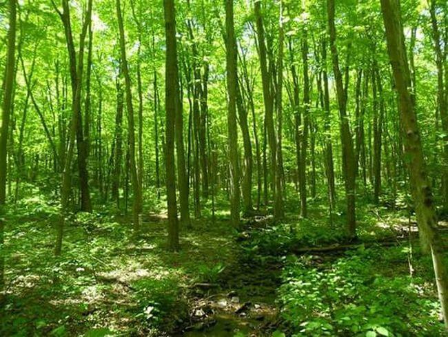 Woods Very Green Serene Hamden, Ct Sunshine Calm