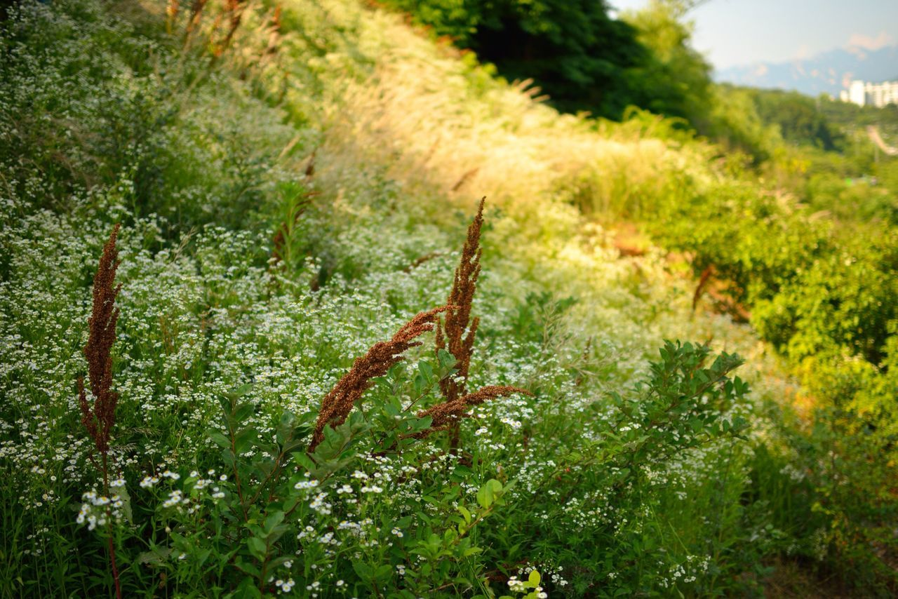 Beautiful stock photos of meadow, Day, Flower, Grass, Green Color