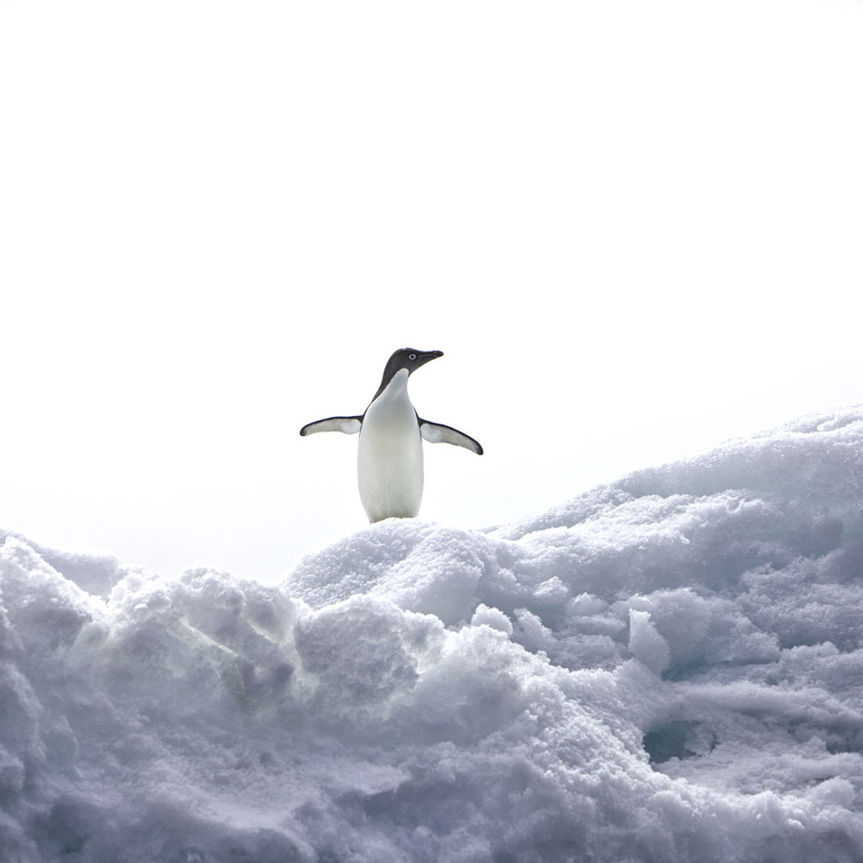 Beautiful stock photos of pinguin, Beauty In Nature, Day, Landscape, Mountain
