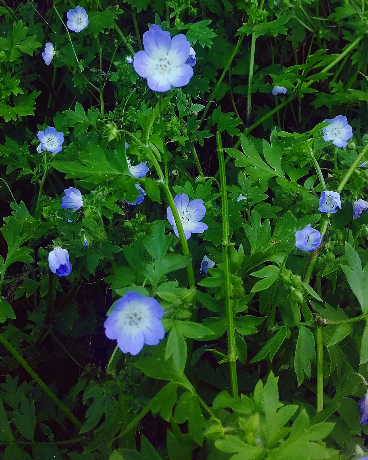 Beauty In Nature Blue Flowers