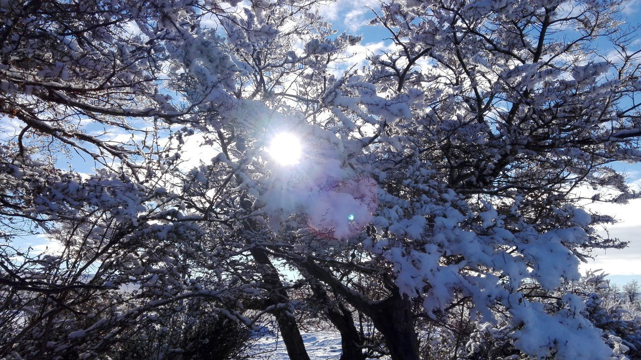 tree, branch, nature, low angle view, beauty in nature, growth, sunlight, tranquility, no people, outdoors, day, scenics, winter, snow, sky, fragility, flower, freshness, close-up