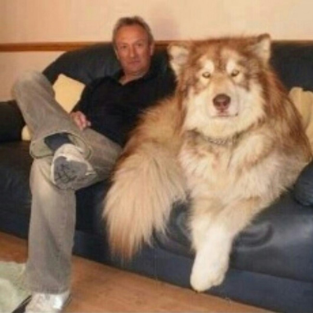 WTF!? Big Fuccin Dog