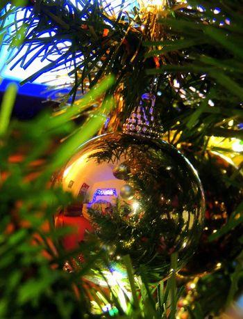 Christmas Christmas Tree Reflections
