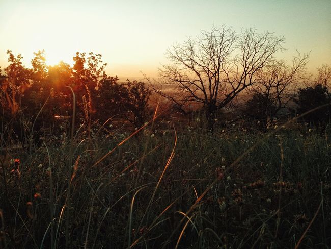 Sunset at Seraya mountain. Sunset Sunset In Mountain Bold Tree Field Flowers Sunset Grass Moto X 43 Golden Moments Dried Tree Reflected Sunset My Favorite Photo Hello World Naturelovers EyeEm Nature Lover Landscape Russia Colour Of Life Beautiful Day Atmosphere