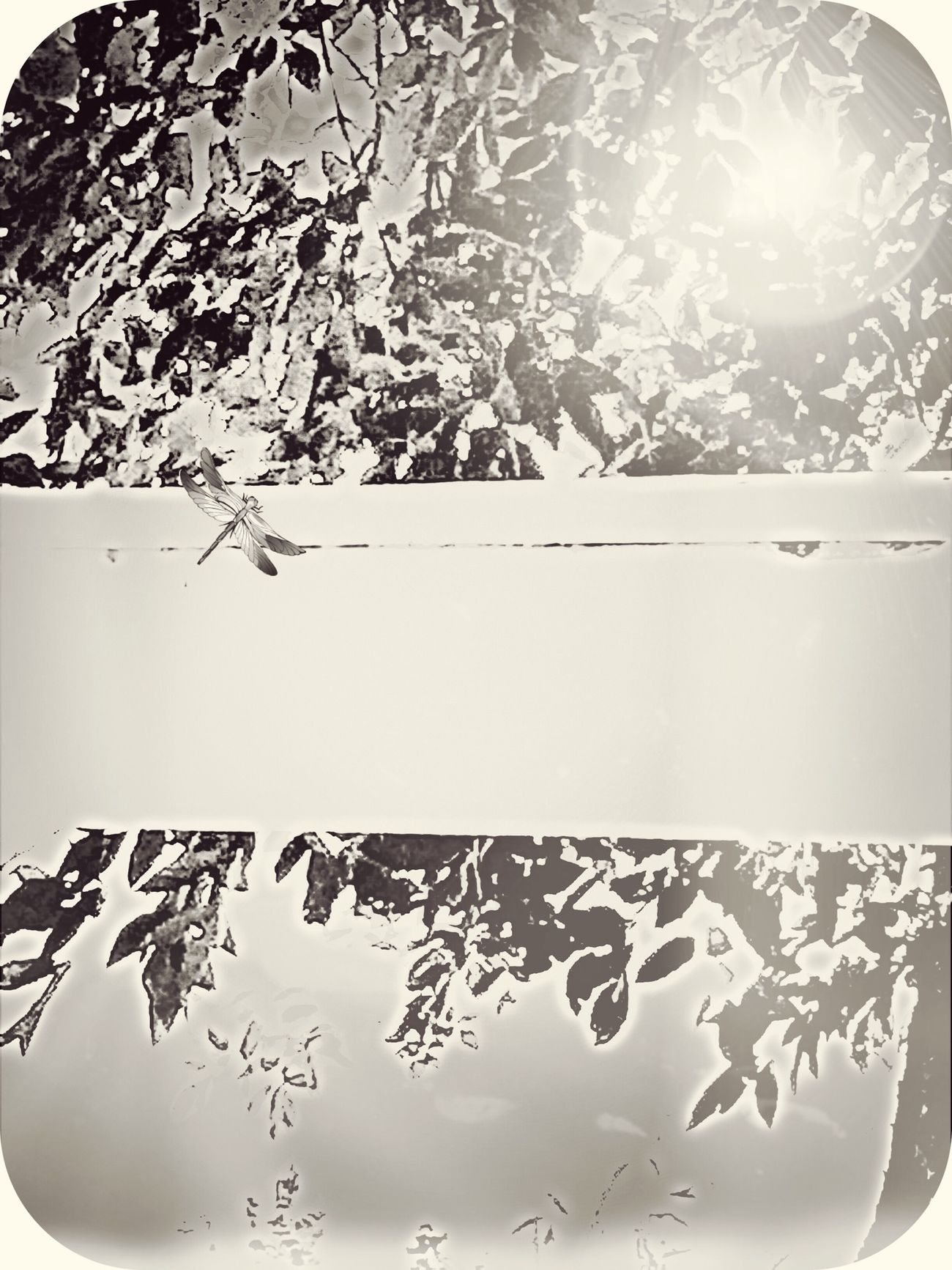 Let me try this again! Light And Shadows From My Point Of View For My Friends That Connect Tadaa Community Streamzoofamily Naturelovers TreePorn Huggingatree  Enjoying The Sun Sunrise_sunsets_aroundworld