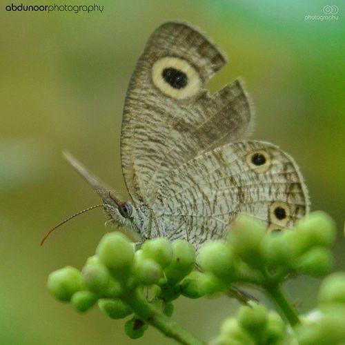 Butterfly is mentally mental. So is Love 💜 Premam ...... Instagram Click Butterfly Love Fly Flower Eye Eyes Nikon D3200 Nikon_india Nikon_photography_ Rain
