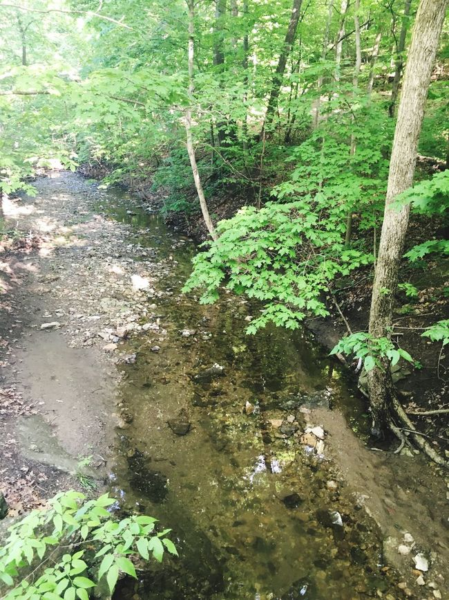 MapleWoods Creek Outside Water