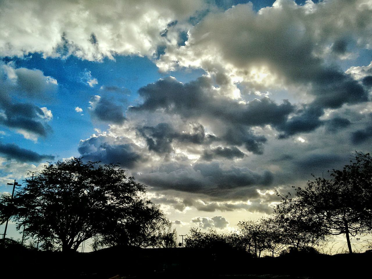 Sky Nature Cloud - Sky Scenics Blue Sky Blue Photography Photo PhotographerSky Hobby Brazil Nordeste  Paraíba Paraíso Sertão Nature Low Angle View Beauty In Nature Cloud - Sky No People Tree Growth Scenics Tranquility First Eyeem Photo