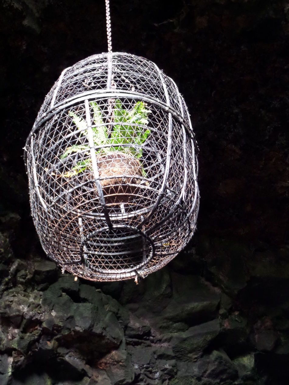 Cage Cagelike Close-up Hanging Hanging Planter Indoors  Metallic No People Pattern Plant Plant In Pot Planter Pot Single Object Sphere