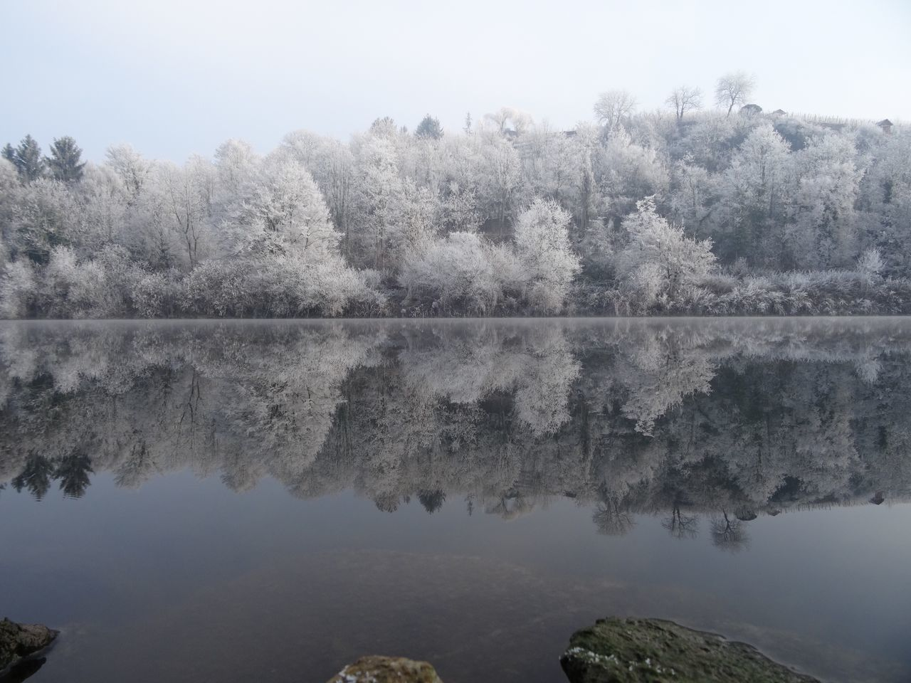 Tree Nature Water Reflection Beauty In Nature Tranquility Scenics Tranquil Scene Fog No People Lake Outdoors Winter Wonderland Neckar River New Year Winter White Frost Landscape Clear Sky Tranquility Idyllic Beauty In Nature Germany Frost Morning