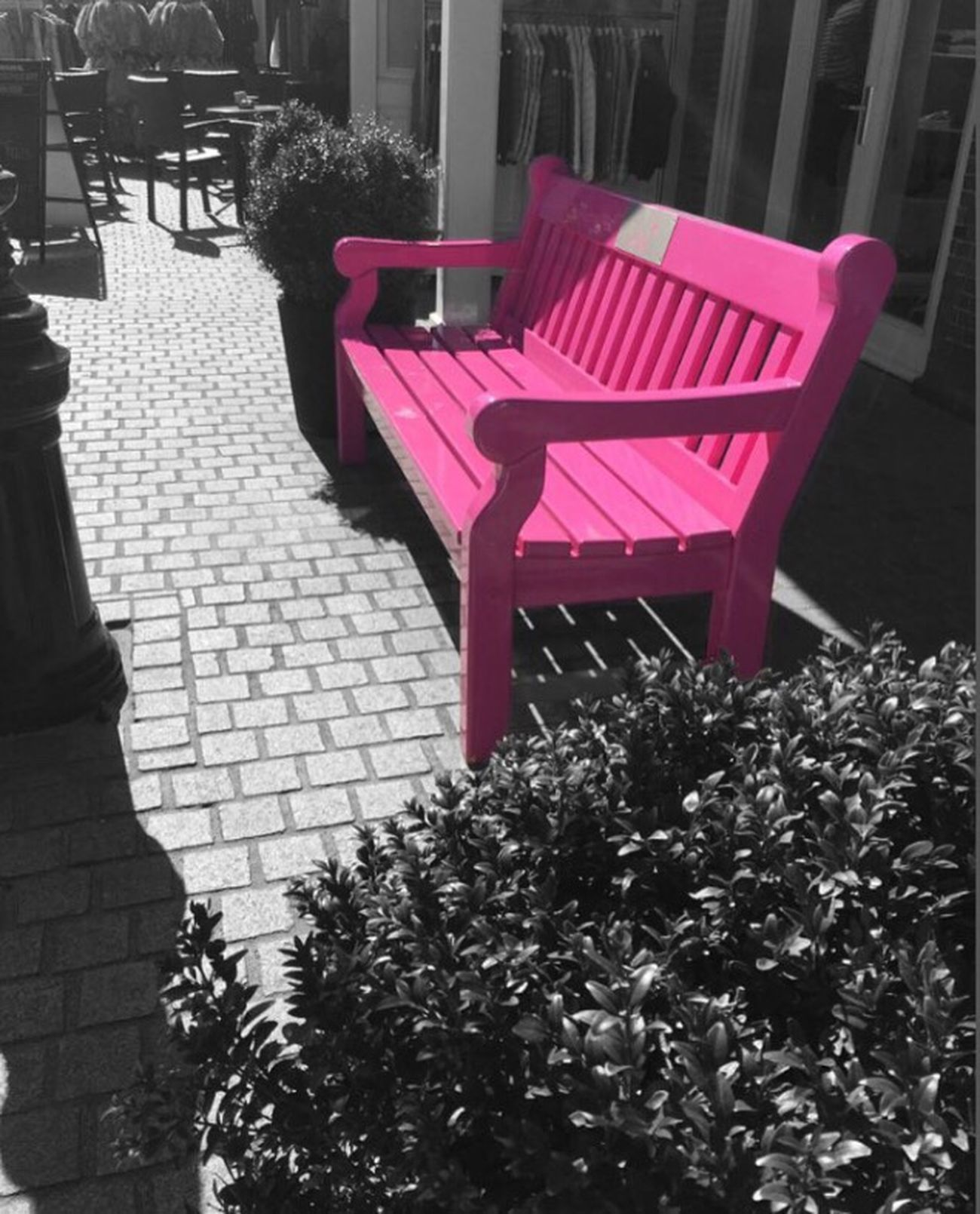 Blackandwhite Pink Bench Taking Photos