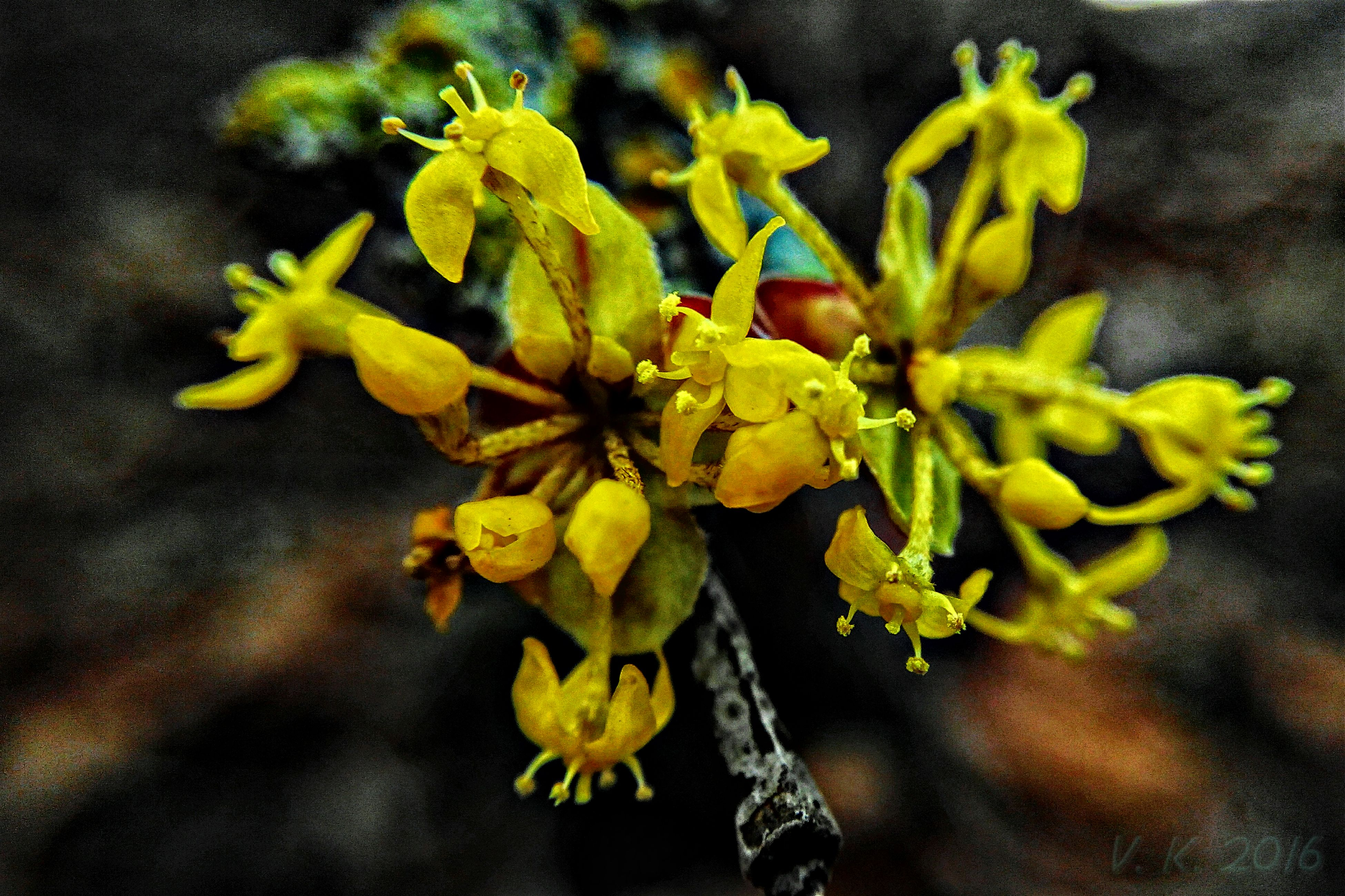 yellow, flower, growth, freshness, fragility, leaf, nature, close-up, petal, focus on foreground, beauty in nature, plant, stem, flower head, outdoors, no people, day, season, botany, bud