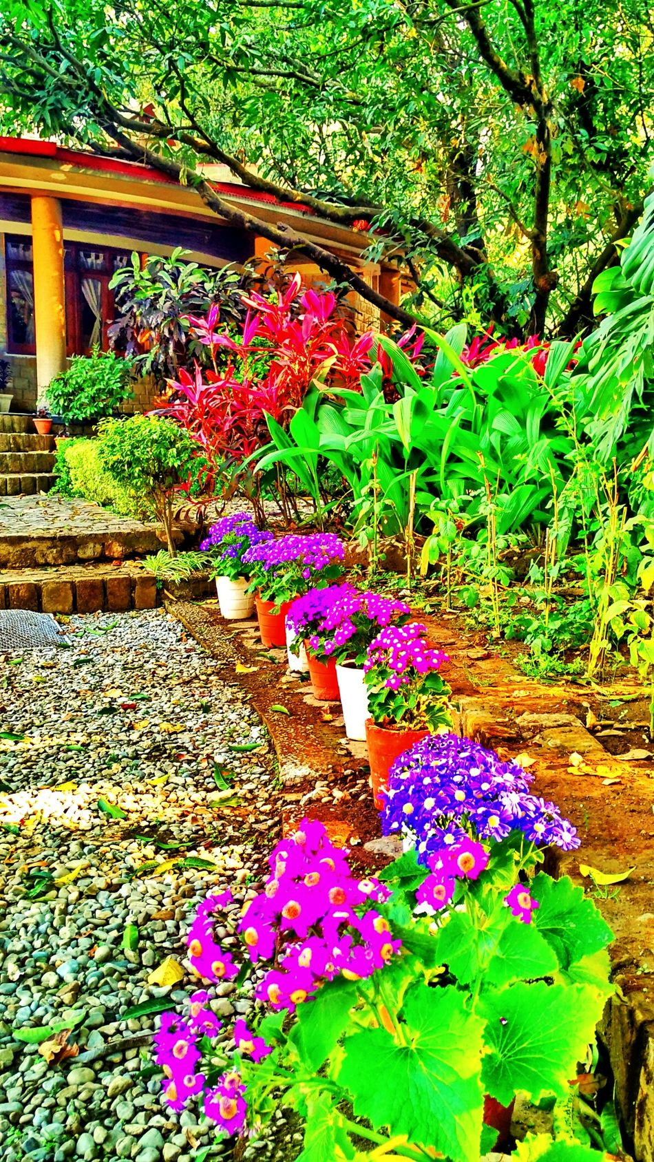 Vibrant Flowers Saturated Jim Corbett The Den Resort Vivid